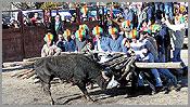 Capeia Arraiana no Carnaval em Aldeia do Bispo, Sabugal