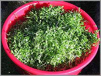 Salada deMaruges
