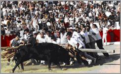 Espera dos bois ao forcao em Aldeia da Ponte-2002