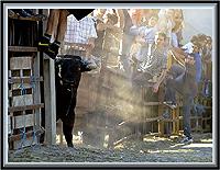 Garraiada na Rua dos Pontões (Sabugal) - Imagem da Semana (30-7-2007)