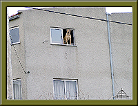 Cão à janela (Soito) - Imagem da Semana (6-8-2007)