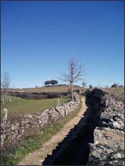 Caminho rural - foto ARCF