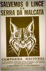 Cartaz da Campanha em Defesa do Lince da Malcata